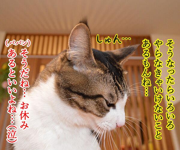 ユニ・チャームがペットとのお別れに特別休暇なんですってッ  猫の写真で4コマ漫画 2コマ目ッ