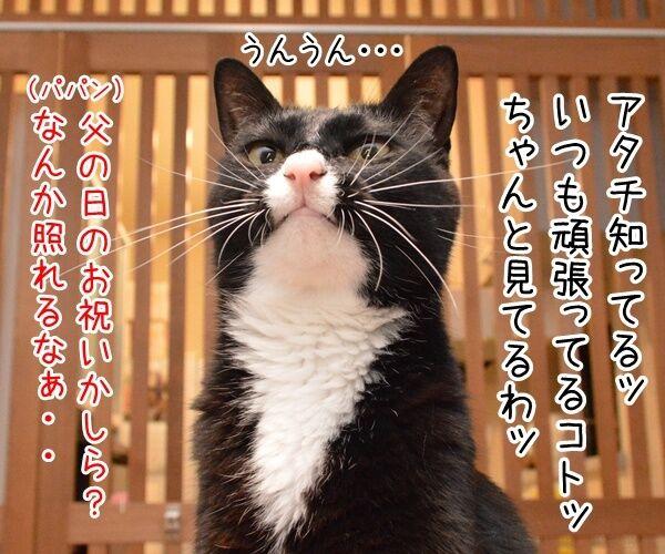 今日は父の日だもんねッ 猫の写真で4コマ漫画 2コマ目ッ