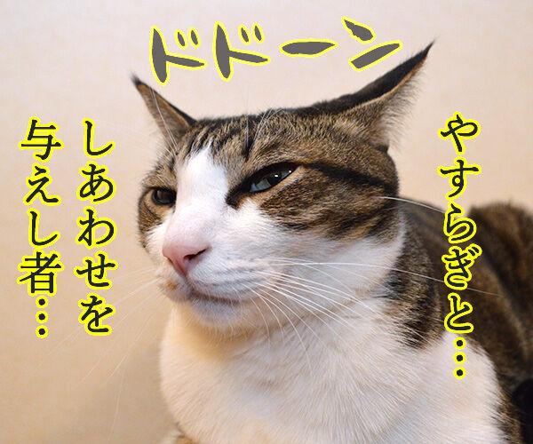私は神…… 猫の写真で4コマ漫画 2コマ目ッ