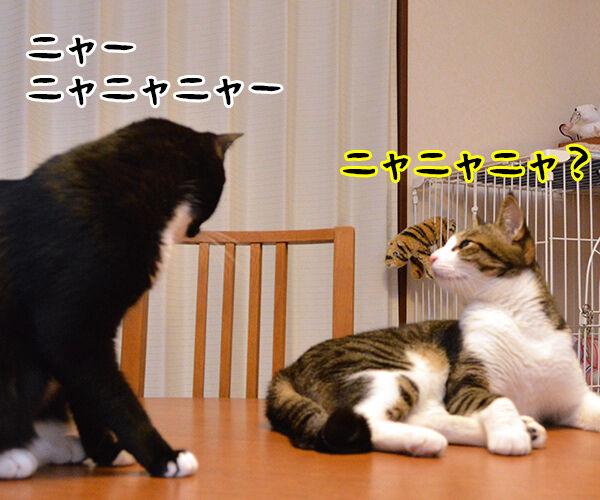 ニャニャニャ 猫の写真で4コマ漫画 1コマ目ッ