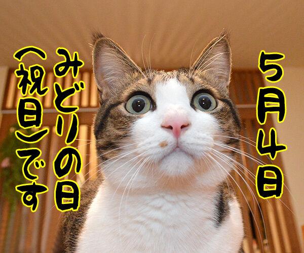 今日は何の日でしょうかッ? 猫の写真で4コマ漫画 2コマ目ッ
