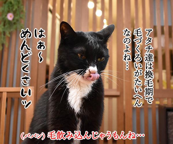 猫のエステサロンはないのかしら? 猫の写真で4コマ漫画 2コマ目ッ
