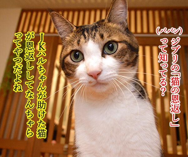 ジブリの猫の恩返しって知ってる? 猫の写真で4コマ漫画 1コマ目ッ
