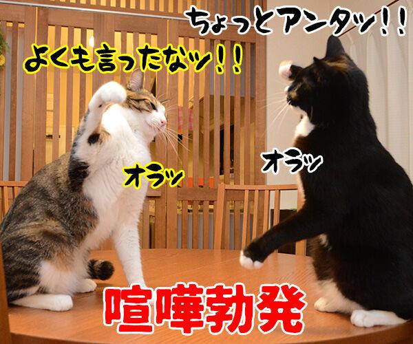 あのね… 猫の写真で4コマ漫画 3コマ目ッ