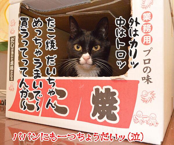「ロイヤルカナンのカリカリ グリニーズ添え」でございます 猫の写真で4コマ漫画 4コマ目ッ