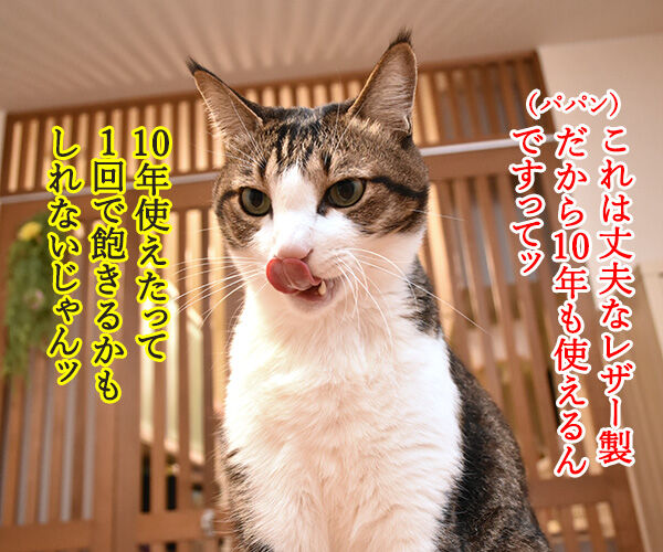どうしても使ってほしいじゃらしがあるのッ 猫の写真で4コマ漫画 2コマ目ッ