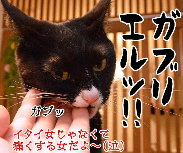 イタい女がいたんですよぉ~ 猫の写真で4コマ漫画 4コマ目ッ