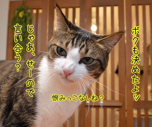 二人が決めたコト 猫の写真で4コマ漫画 2コマ目ッ