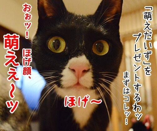 お詫びにかえて 猫の写真で4コマ漫画 2コマ目ッ