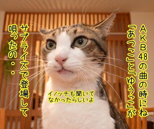 第66回NHK紅白歌合戦は紅組が勝利 猫の写真で4コマ漫画 3コマ目ッ