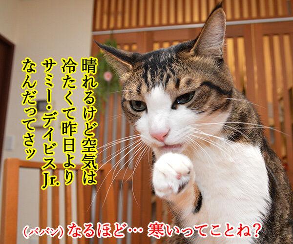 きょうは一段とサミー・ソーサらしいわよ? 猫の写真で4コマ漫画 2コマ目ッ