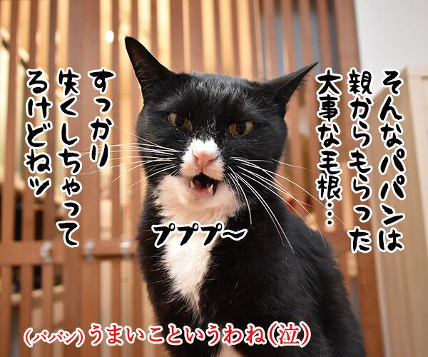 親からもらった大事な… 猫の写真で4コマ漫画 2コマ目ッ