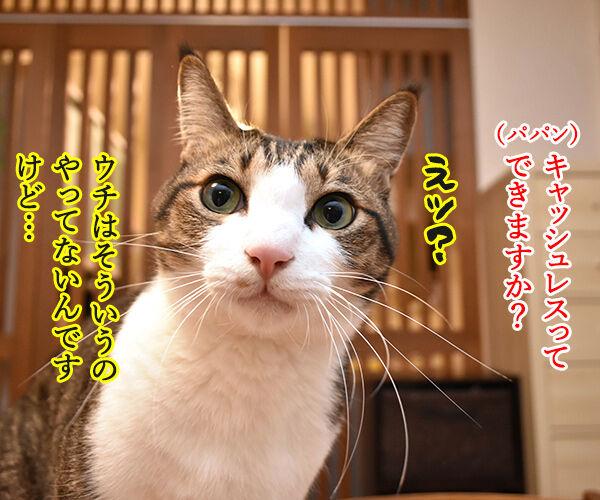 あずだいマートでお買い物 其の五 猫の写真で4コマ漫画 2コマ目ッ