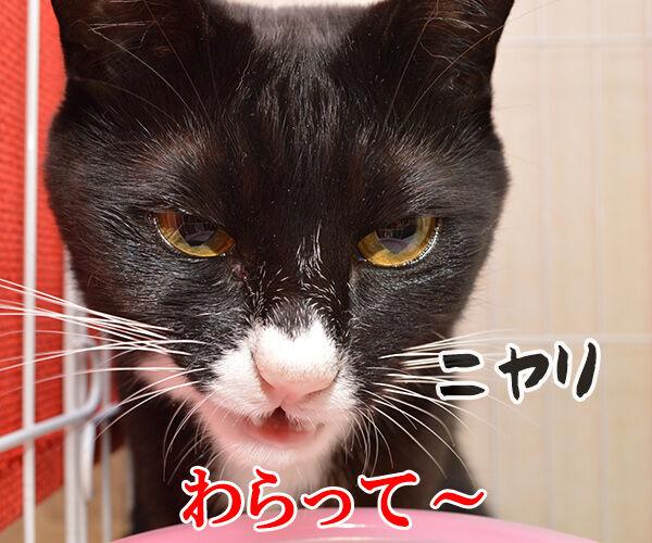 キャンディ キャンディ 猫の写真で4コマ漫画 3コマ目ッ