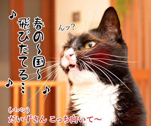 今日はパパンちの忘年会 猫の写真で4コマ漫画 3コマ目ッ