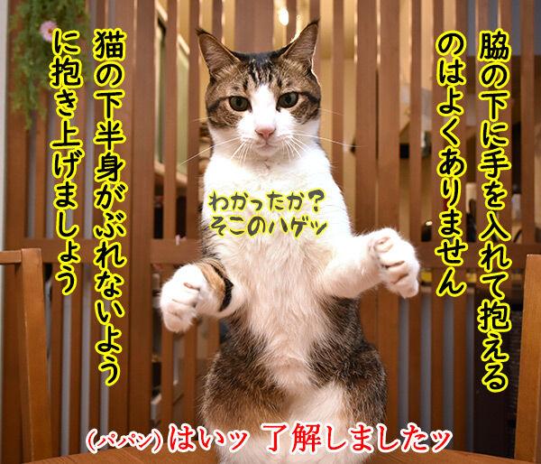 猫さんの上手な抱き上げ方って? 猫の写真で4コマ漫画 2コマ目ッ