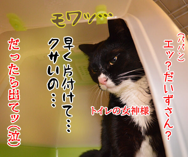 ウンチョスの後は… 猫の写真で4コマ漫画 4コマ目ッ