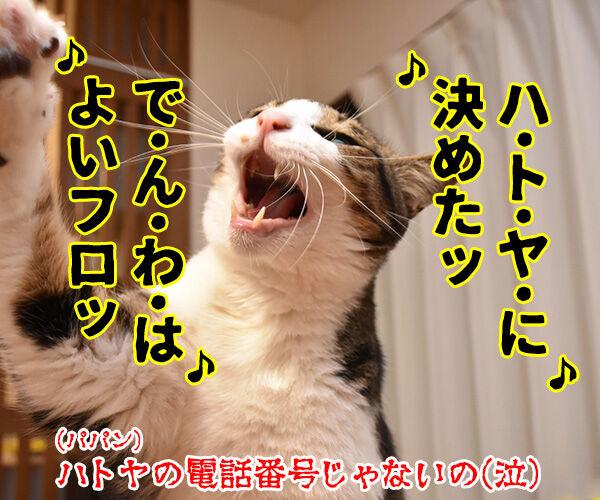 4月26日は『よい風呂の日』なんですってッ 猫の写真で4コマ漫画 4コマ目ッ