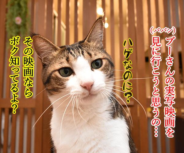 『プーと大人になった僕』を見ようと思うのッ 猫の写真で4コマ漫画 1コマ目ッ