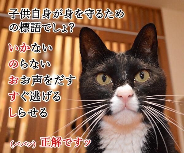「いかのおすし」って知ってる? 猫の写真で4コマ漫画 2コマ目ッ