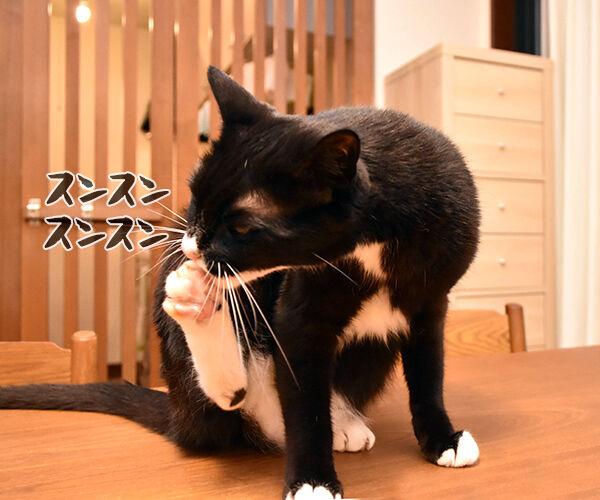 お耳の中がかゆいのよッ 猫の写真で4コマ漫画 3コマ目ッ