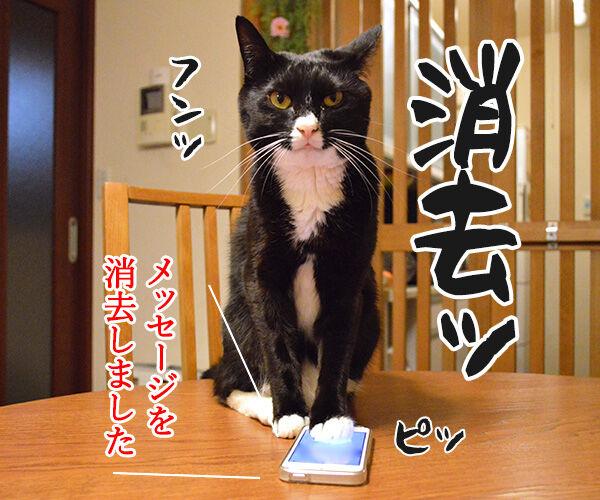 1件の新しいメッセージ 猫の写真で4コマ漫画 4コマ目ッ