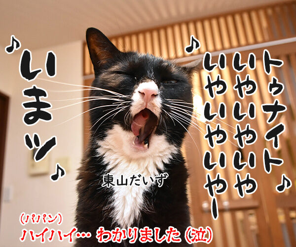 オヤツは今夜じゃイヤなのよッ 猫の写真で4コマ漫画 4コマ目ッ