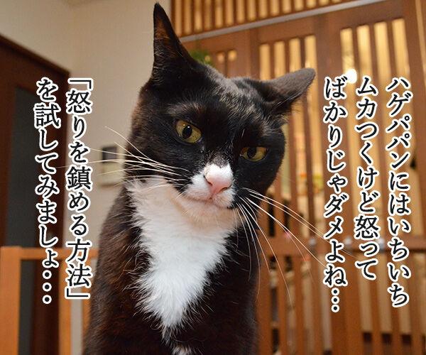 怒りを鎮める方法を試してみましょ 猫の写真で4コマ漫画 1コマ目ッ