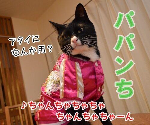 ひとりアド街コレクション 猫の写真で4コマ漫画 3コマ目ッ