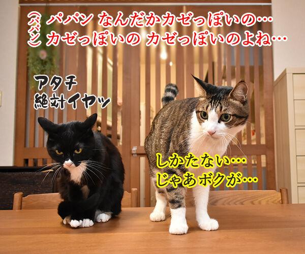 動物が弱っている時はたくさん愛情を注入してあげるといいのよッ 猫の写真で4コマ漫画 3コマ目ッ