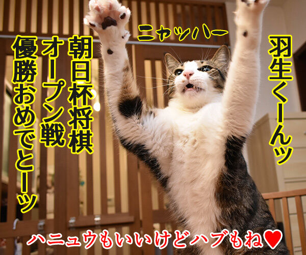 羽生くーんッ ガンバッテーッ 猫の写真で4コマ漫画 4コマ目ッ
