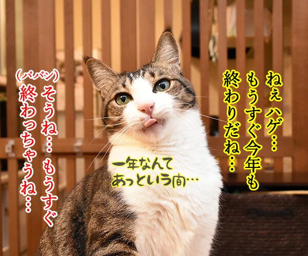 今年やり残したコト 猫の写真で4コマ漫画 1コマ目ッ