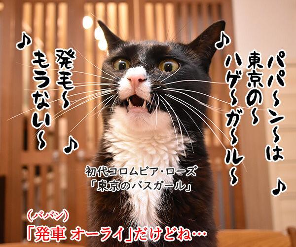 パパンは東京のハゲ… 猫の写真で4コマ漫画 3コマ目ッ