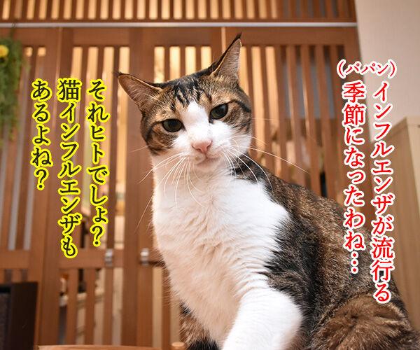 インフルエンザが流行ってるみたいなのッ 猫の写真で4コマ漫画 1コマ目ッ