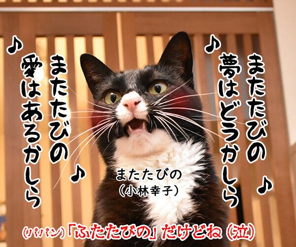 またたび LOVE 猫の写真で4コマ漫画 4コマ目ッ