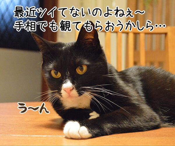 肉球うらない 猫の写真で4コマ漫画 1コマ目ッ