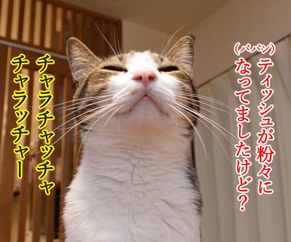 パパンの説教 其の二 猫の写真で4コマ漫画 2コマ目ッ
