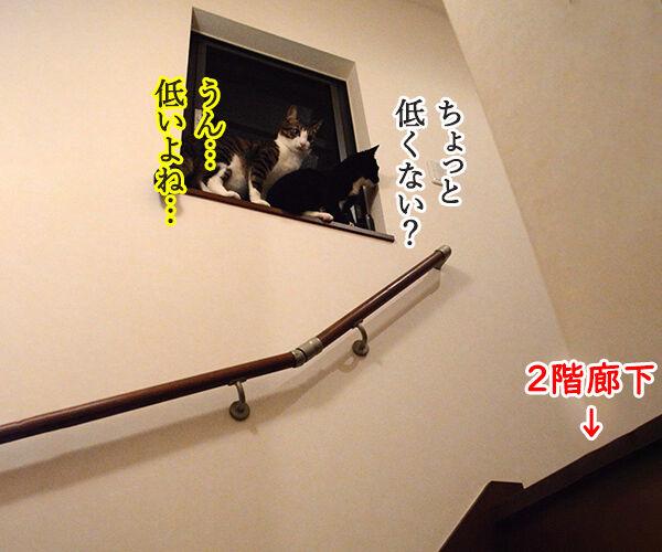 なんということでしょう? 猫の写真で4コマ漫画 3コマ目ッ