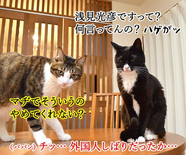 きょうは一段とサミー・ソーサらしいわよ? 猫の写真で4コマ漫画 4コマ目ッ