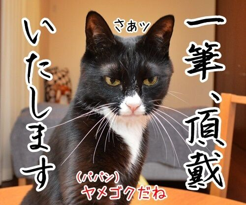ヤメゴク~ヤクザやめて頂きます~ 猫の写真で4コマ漫画 1コマ目ッ