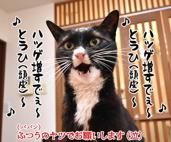 10月6日はパパンのお誕生日なのよッ 猫の写真で4コマ漫画 4コマ目ッ