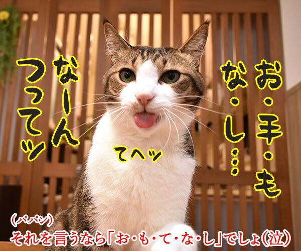 小泉進次郎さん 滝川クリステルさん ご結婚オメデトゴザマース 猫の写真で4コマ漫画 3コマ目ッ