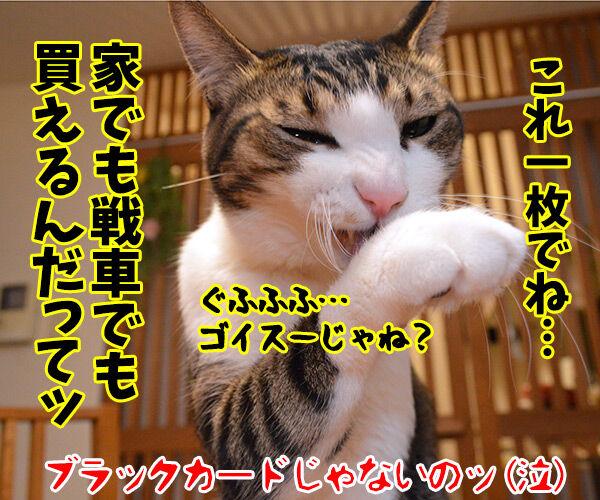 マイナンバーカード 持ってる? 猫の写真で4コマ漫画 4コマ目ッ