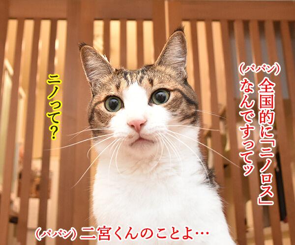 嵐の二宮くんが結婚して「ニノロス」なのッ 猫の写真で4コマ漫画 1コマ目ッ