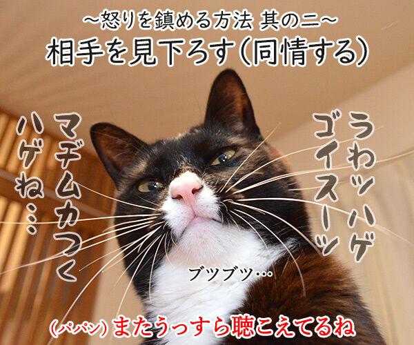 怒りを鎮める方法を試してみましょ 猫の写真で4コマ漫画 3コマ目ッ