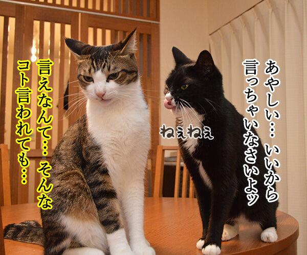 隠してなぁい? 猫の写真で4コマ漫画 3コマ目ッ