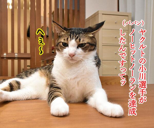 ヤクルトの小川選手がノーヒットノーランなんですってッ 猫の写真で4コマ漫画 1コマ目ッ