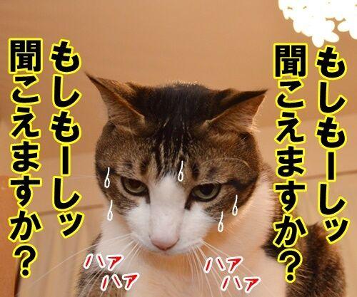 大きな声で呼びかけてッ 猫の写真で4コマ漫画 1コマ目ッ