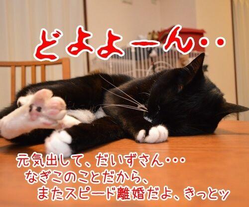 遠野なぎこさん 結婚おめでとう 猫の写真で4コマ漫画 3コマ目ッ