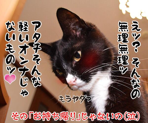 きょうは「ハンバーガーの日」だから 猫の写真で4コマ漫画 4コマ目ッ